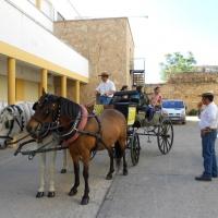 Paseos en caballo.