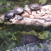 Visita al zoo de Lisboa. - 0