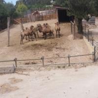 Visita al zoo de Lisboa. - 3