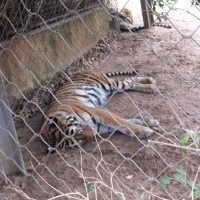 Visita al zoo de Lisboa. - 9