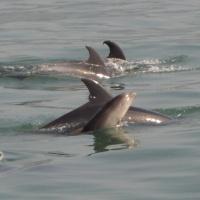 Paseo con delfines. Estuario do Sado. - 6