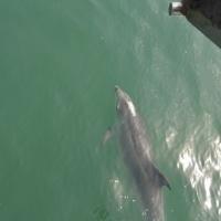 Paseo con delfines. Estuario do Sado. - 10