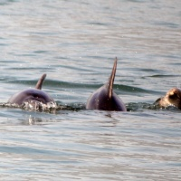 Paseo con delfines. Estuario do Sado. - 15