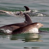 Paseo con delfines. Estuario do Sado. - 16