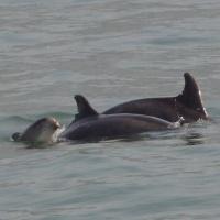 Paseo con delfines. Estuario do Sado. - 18