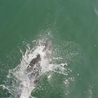 Paseo con delfines. Estuario do Sado. - 20