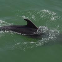 Paseo con delfines. Estuario do Sado. - 21