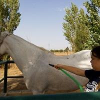 Rutas a caballo. - 10