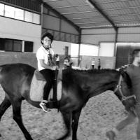 Un día diferente entre caballos. - 1