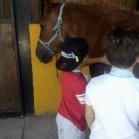 Un día diferente entre caballos. - 7