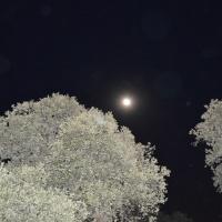 Una noche de estrellas. - 8