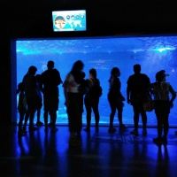 Visita al acuario de Sevilla I - 3