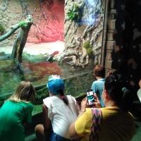 Visita al acuario de Sevilla I - 6
