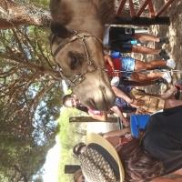 Ruta en camellos - 6