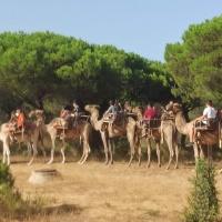 Ruta en camellos - 9